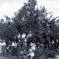 Äppelskörd på Seminariet i Skara 1903 emil.jpg
