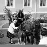 Häst och vagn - en gång centrala för kommunikationerna